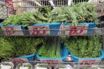 Herbs, 85 cents!