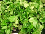 Organic watercress.  Glowing green healthiness.
