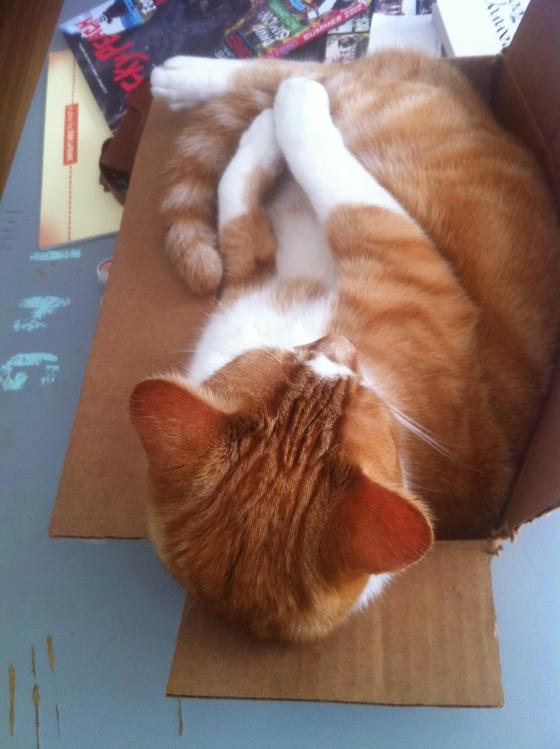 Jasper in Box Hammock